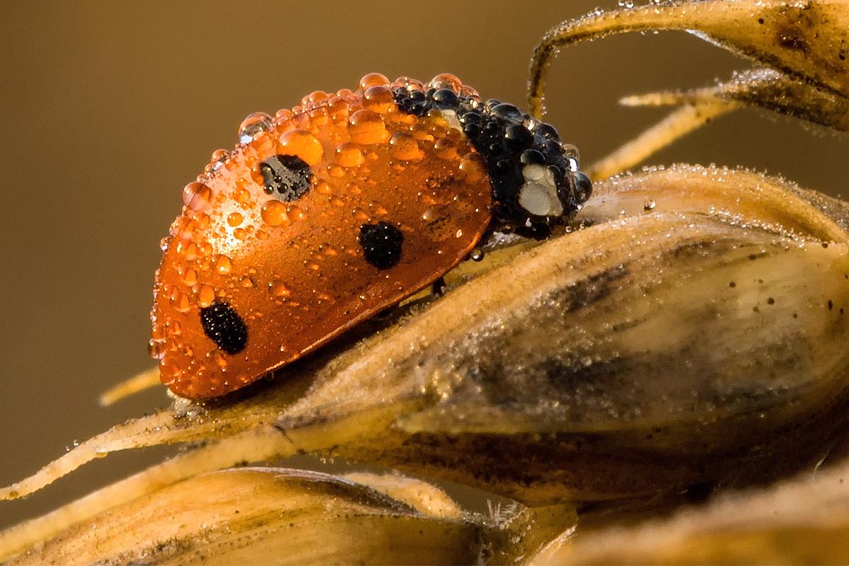 Insektenmakros